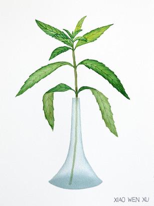 Lemon Verbena Bouquet in Vase, 2021