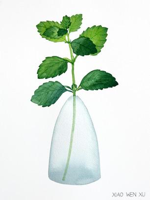 Lemon Balm Bouquet in Vase, 2021