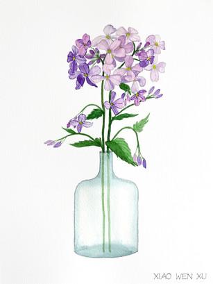 Dame's Rocket Bouquet in Vase, 2021