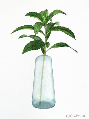 Stevia Bouquet in Vase, 2021