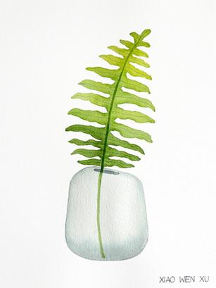 Rock Polypody Bouquet in Vase, 2021