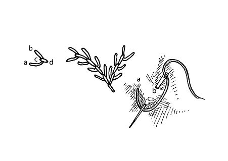 Fly Stitch-01.jpg
