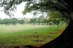 lyne3.jpg