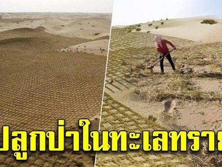 ปลูกป่าในทะเลทราย