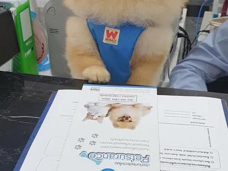 Petsurance บริษัทประกันสุขภาพสัตว์เลี้ยง ให้ความคุ้มครองสูงสุด 1 แสนบาท!!!