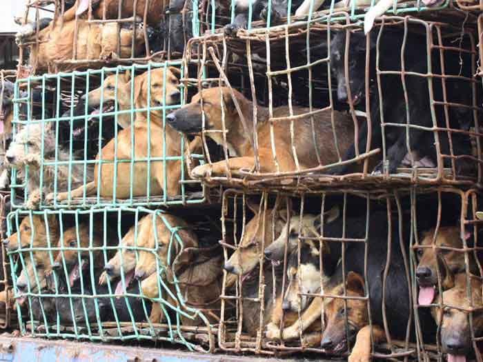 Vereadores de Curitiba debatem multa para maus tratos a animais