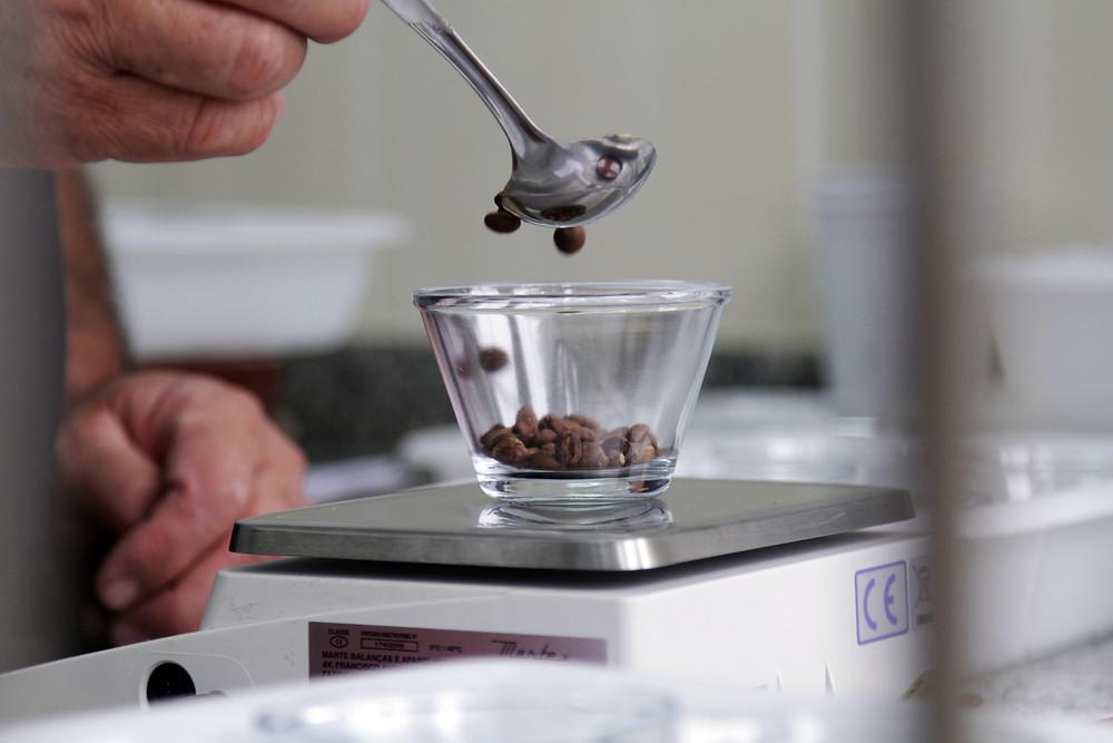 Produtoras do Paraná fazem leilão de cafés especiais