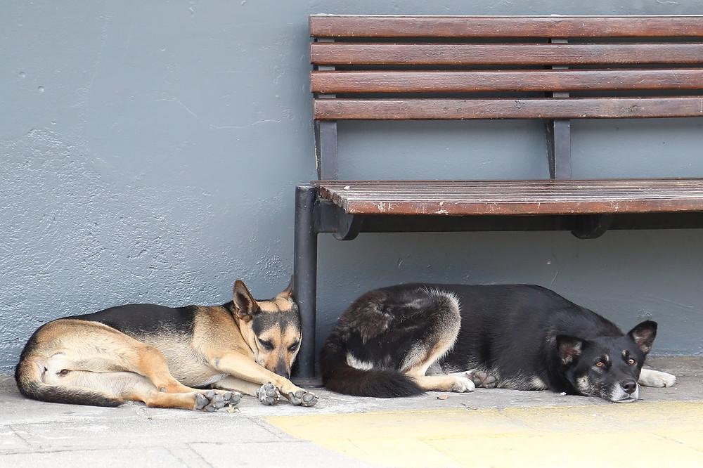 Câmara promove audiência pública sobre direitos dos animais