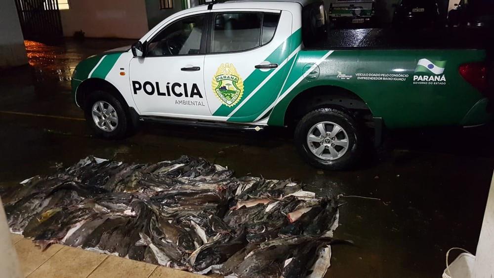 Polícia Ambiental apreende 230 kg de peixe no Parque Iguaçu