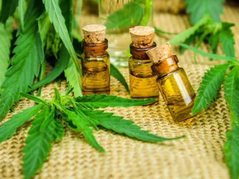 Comissão do Senado aprova cultivo da maconha para uso medicinal