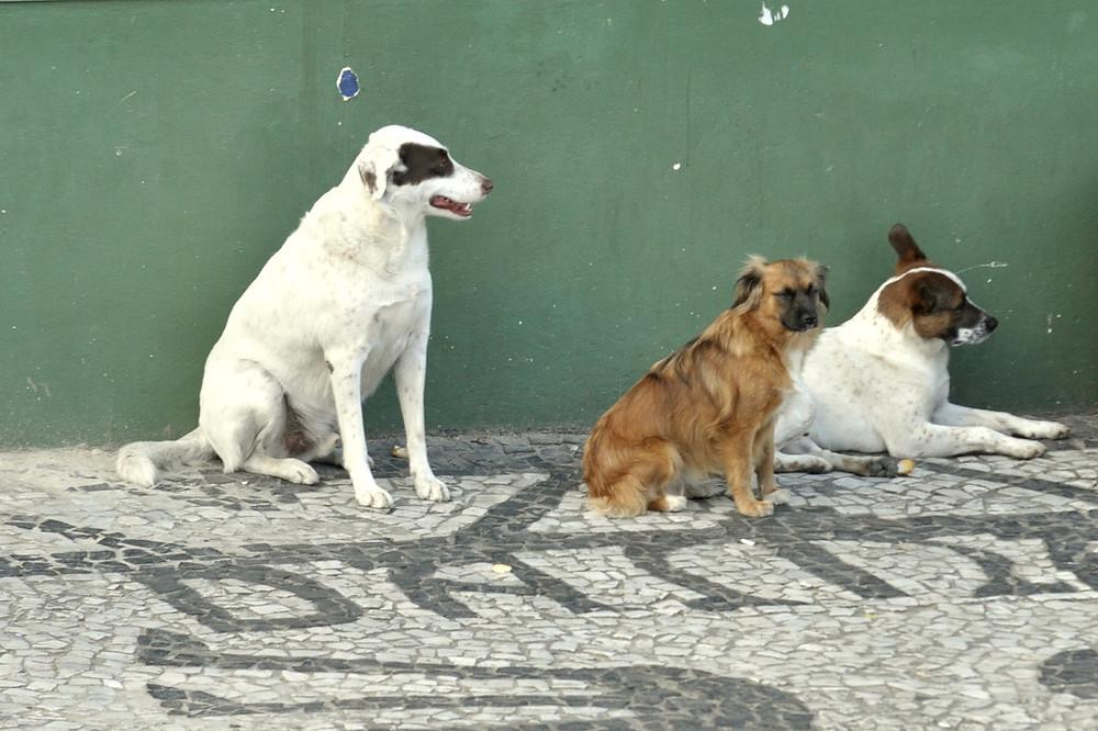 Vereadores de Curitiba debatem três projetos de proteção a animais