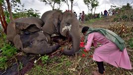 18 elefantes são achados mortos na Índia