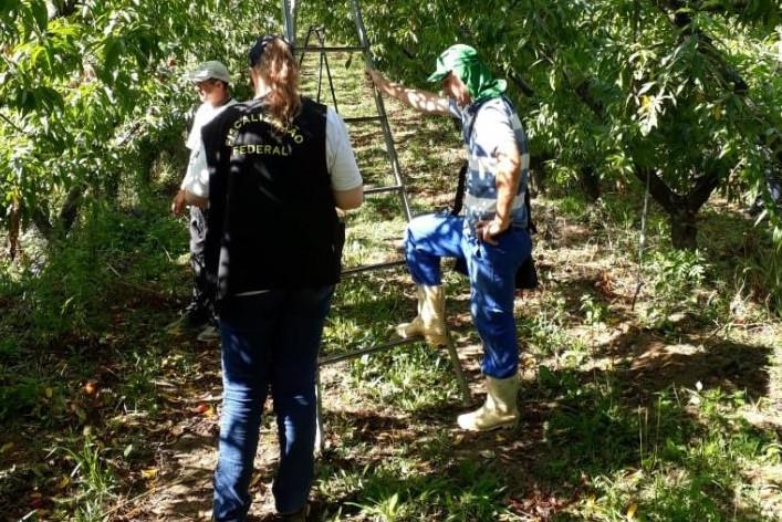 Ministério do Trabalho flagra trabalho infantil em colheita no Paraná