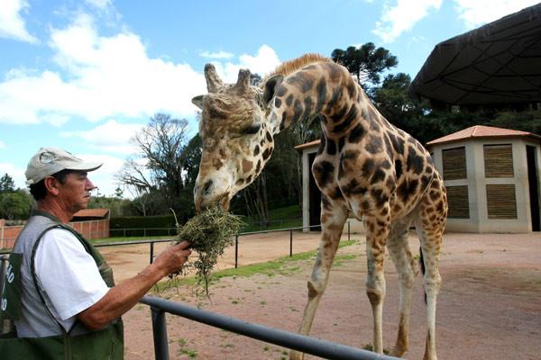 Zoológico de Curitiba tem horário de funcionamento ampliado