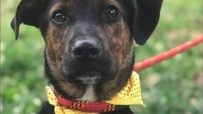Rede de Proteção promove evento de adoção de animais pelo Facebook