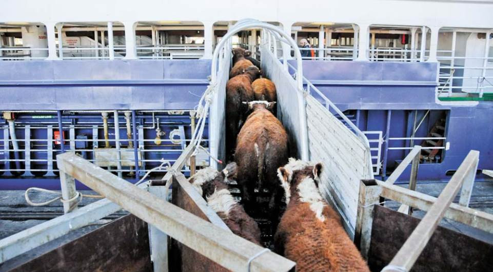 Brasil vai exportar gado vivo para o Irã
