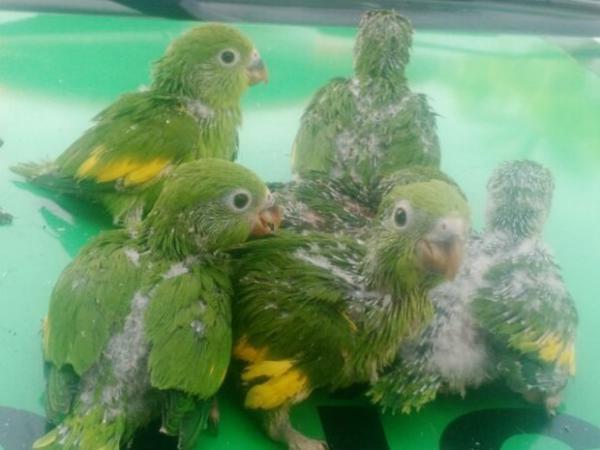 Polícia ambiental resgata 130 animais silvestres no Boqueirão