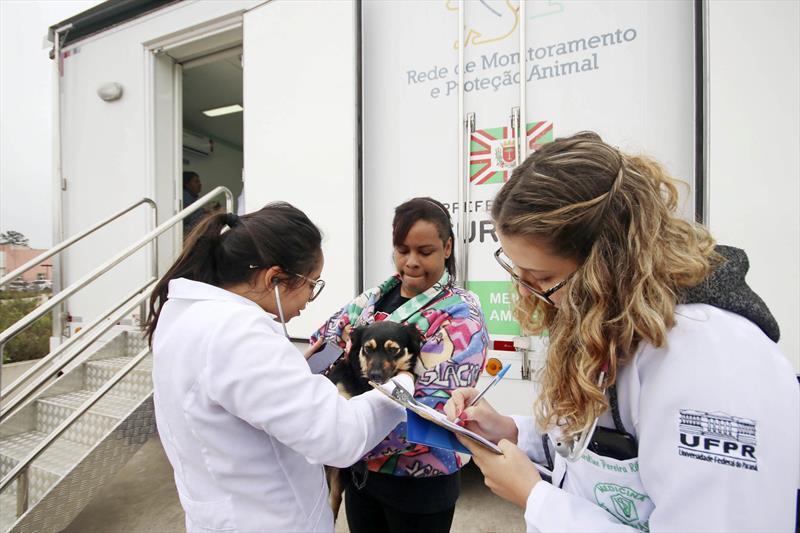 Proteção animal atendeu 16,7 mil cães e gatos em Curitiba