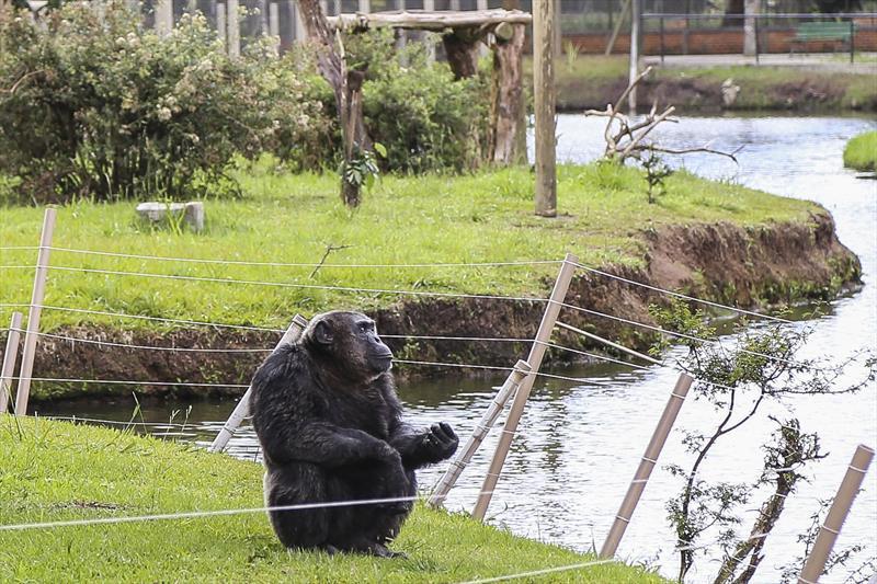 Crianças comemoram Dia Mundial do Chimpanzé ao lado de Bob