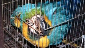 PF prende um dos maiores traficantes de animais do país