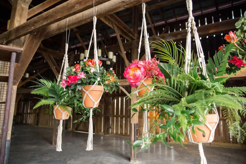 Hanging-Tropical-Flowers.jpg