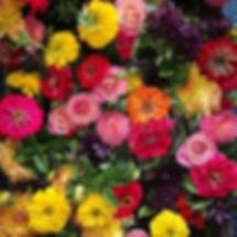 #marigold #dahlia #zinnia #localflowers