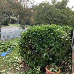 The front bushes needed a trim.