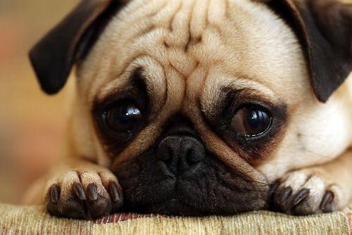 sad-dog_edited.jpg