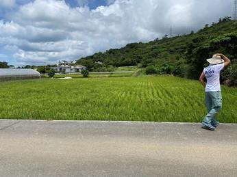 稲作盛んな真喜屋キャンペーンボーイ現る