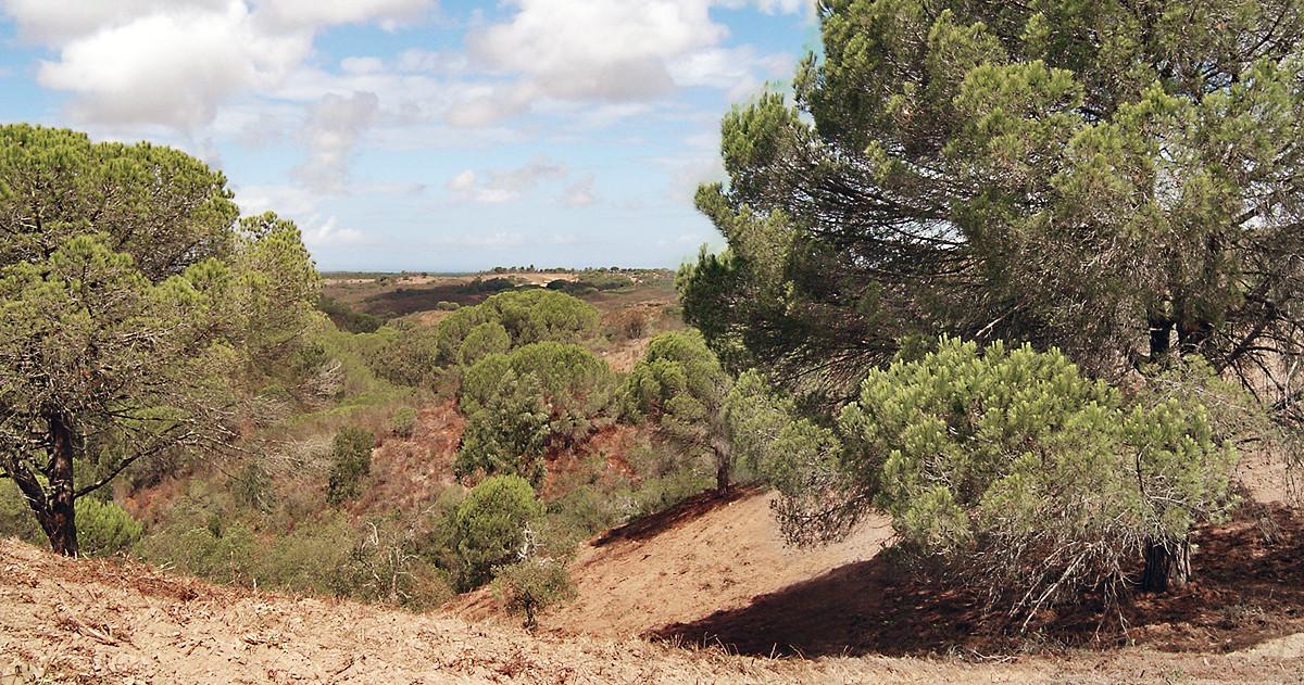 paisagem02.jpg