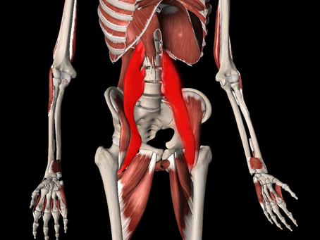 The Psoas Muscle And The Importance Of Keeping It Healthy