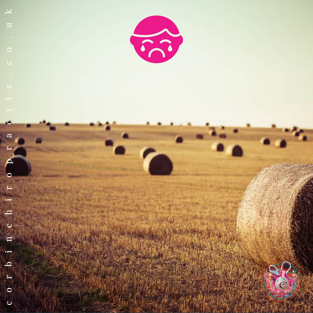 Field of hey