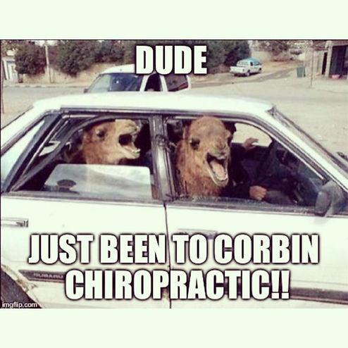 Chiropractic meme, camels in car.jpg