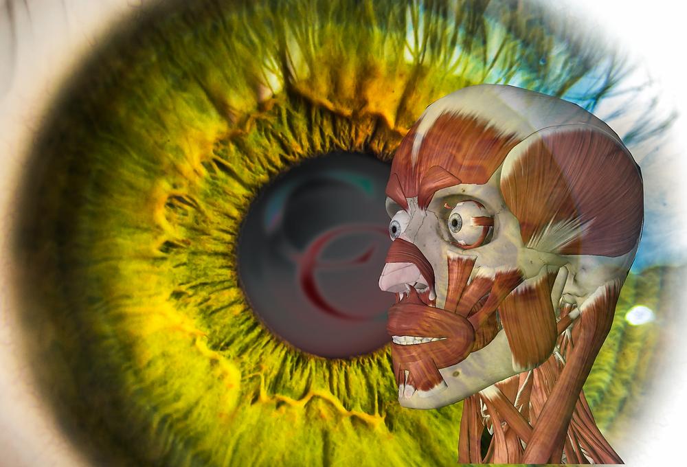Eye Muscle
