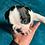 Thumbnail: Boston terrier machinho