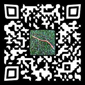 Barefoot Pip's QR Code