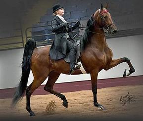 American Saddlebred. 5-Gaited