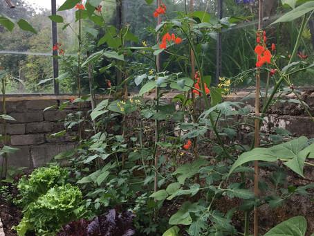 Get gardening!