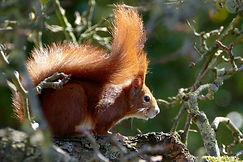 squirrel-3247305_1920.jpg