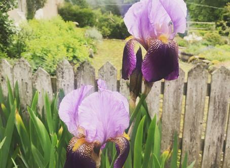 Garden notes for June