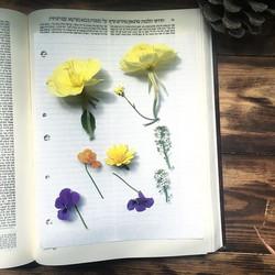 Pressed Flowers for Ketubah