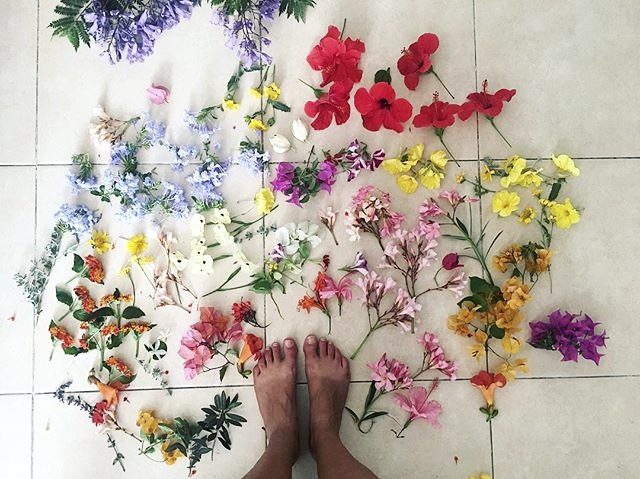 Foraged Flowers from Yafo