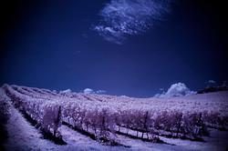 Infra3 Vineyard