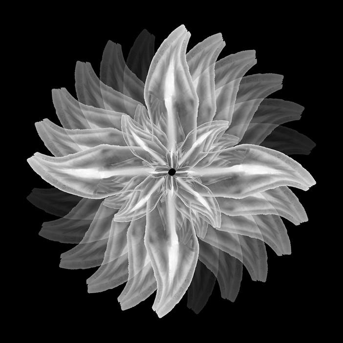 'Bioemulation' series