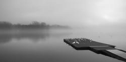 Genius Loci10_morning mist