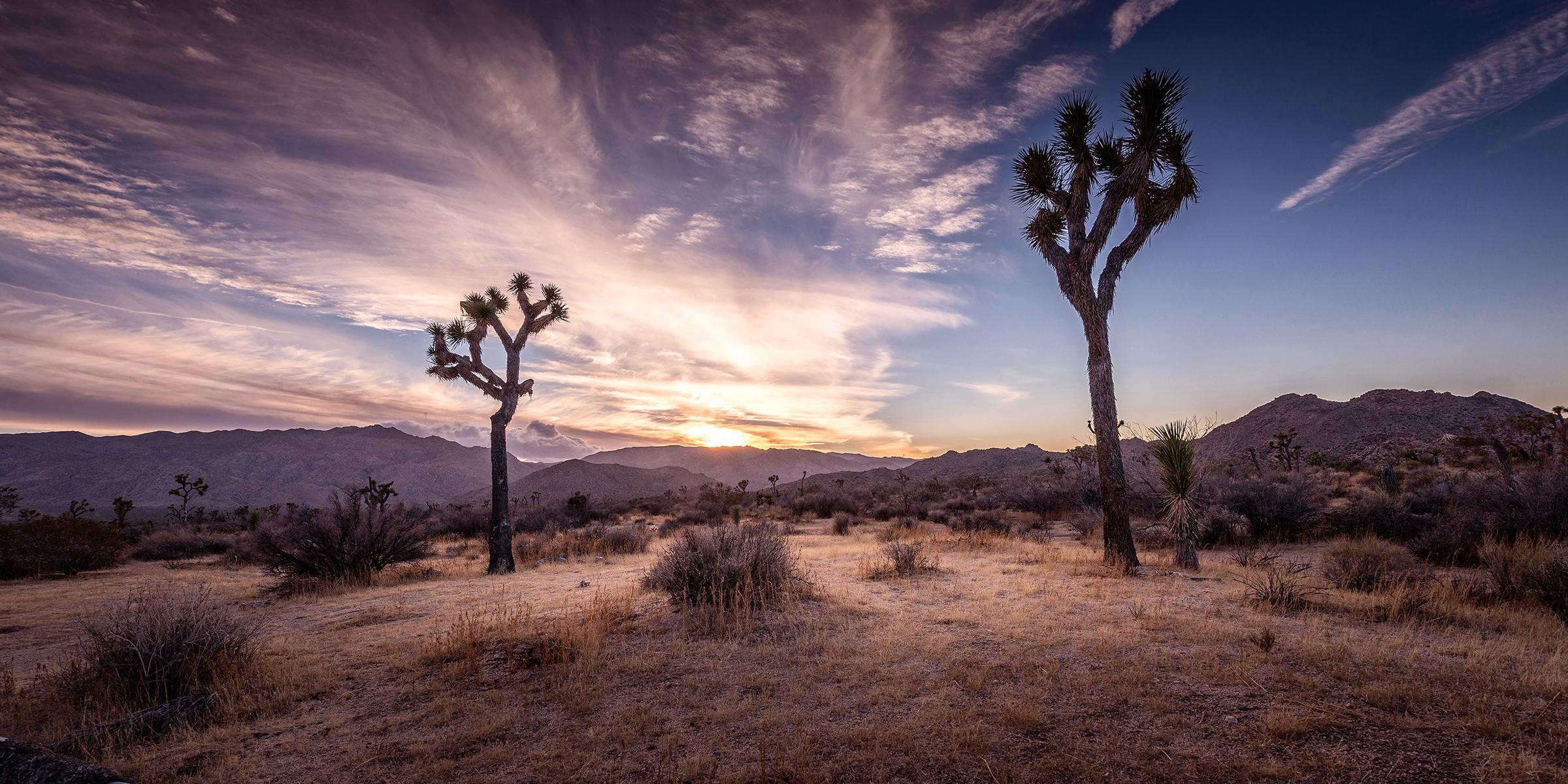 Joshua Tree Park, California