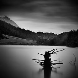 Lake Doxa2_tree