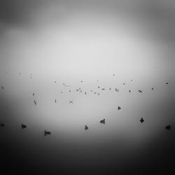 Genius Loci6_varese ducks