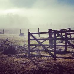 Foggy winter's morning