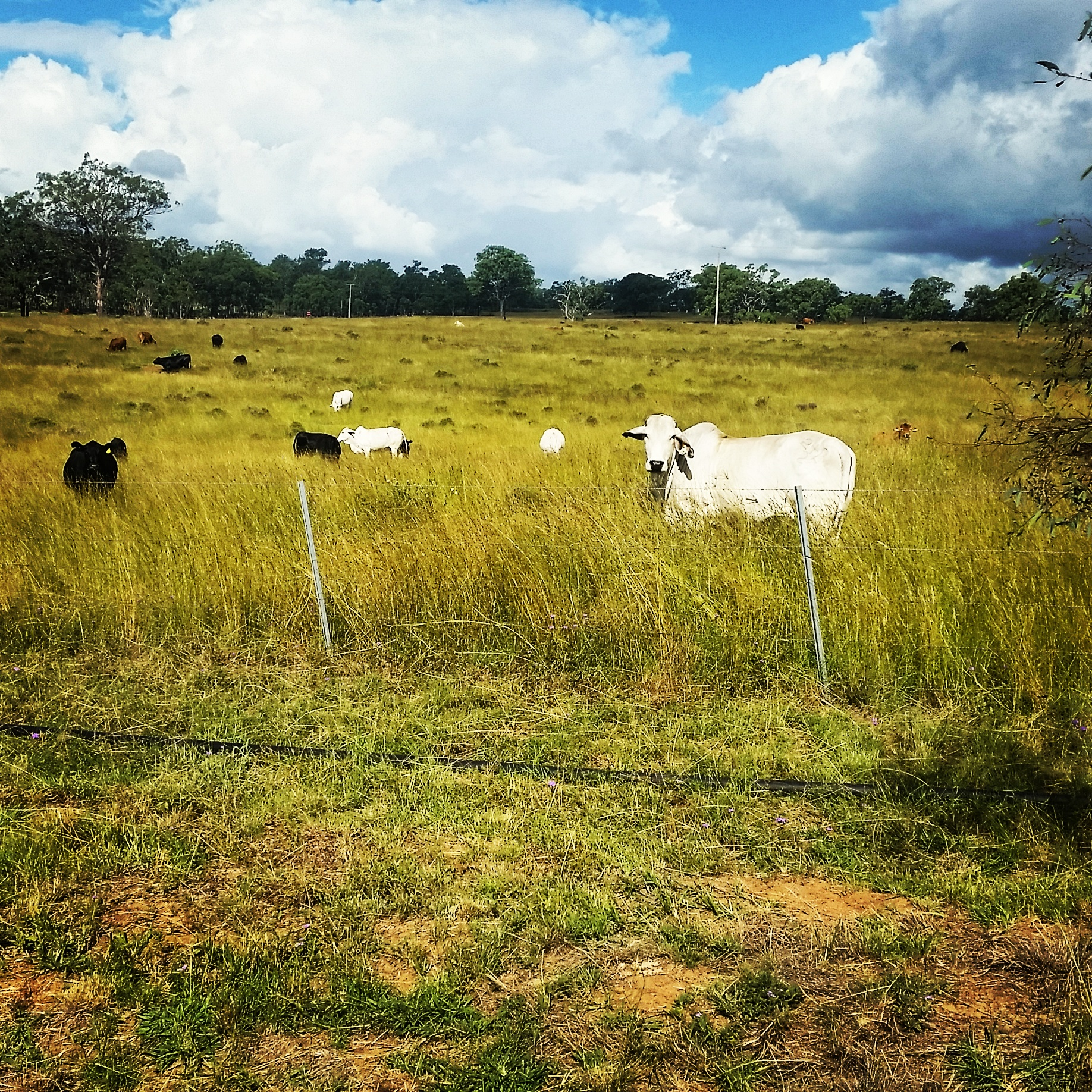Grazing the Cottage paddock